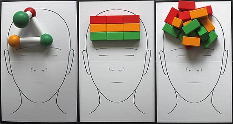 3 verschillende breinen